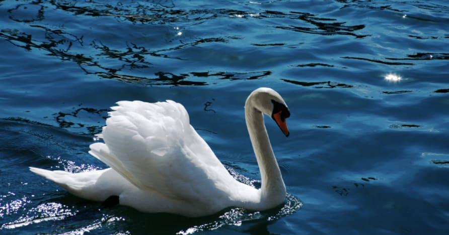 Ainsworth Gaming's Royal Swan: En fullständig recension